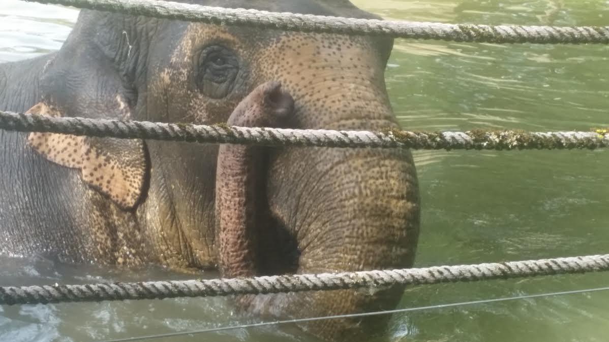 Betagte Zoobewohnerin: Elefantenkuh Targa