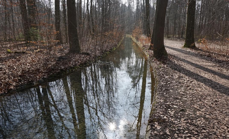 Die Bäche im Stadtwald sollen strukturreicher werden - Bilderrechte: Forstverwaltung/Stadt Augsburg